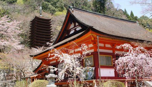 【奈良の桜】談山神社の桜。見頃を過ぎてもまだまだ綺麗!